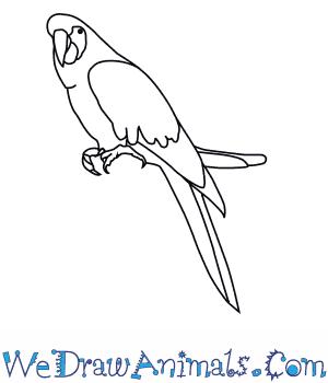 300x350 How To Draw A Scarlet Macaw