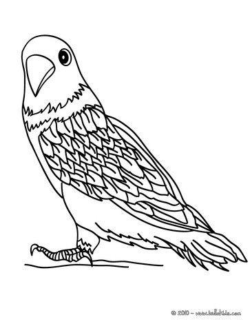 Parakeet Drawing At Getdrawings Com Free For Personal Use Parakeet