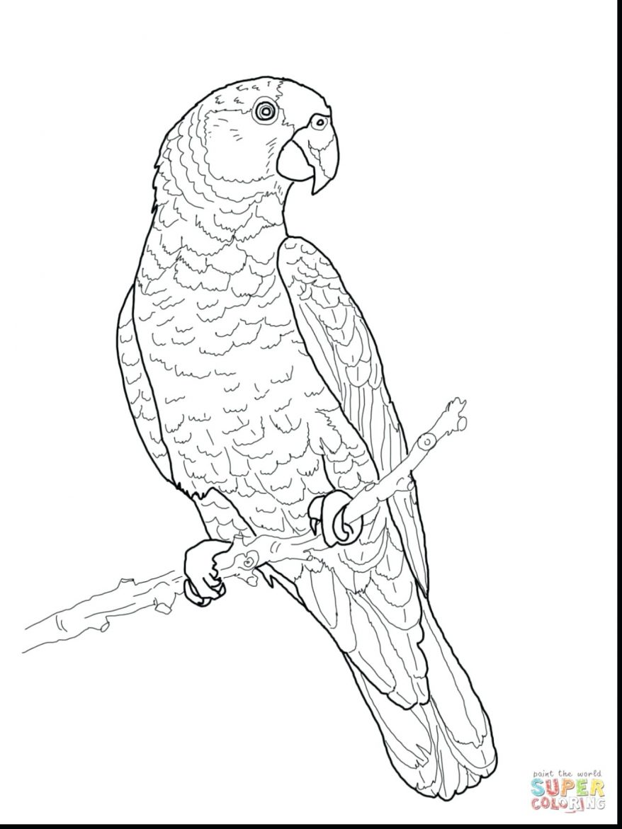 878x1171 Vector Of A Cartoon Boring Parrot Talking Coloring Page Outline
