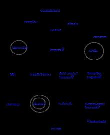 220x269 Quadrilateral