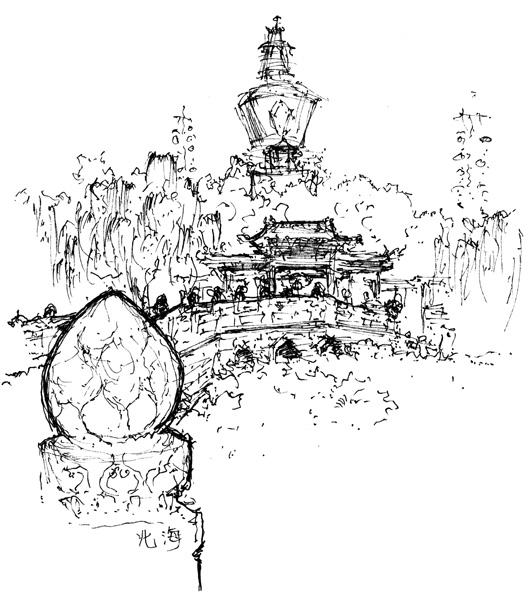 525x600 Serenali Drawing