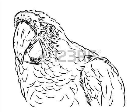 Parot Drawing