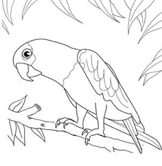 236x243 Beautiful Macaw Bird Painting Bird Art Art Print Size 8x10 Birds