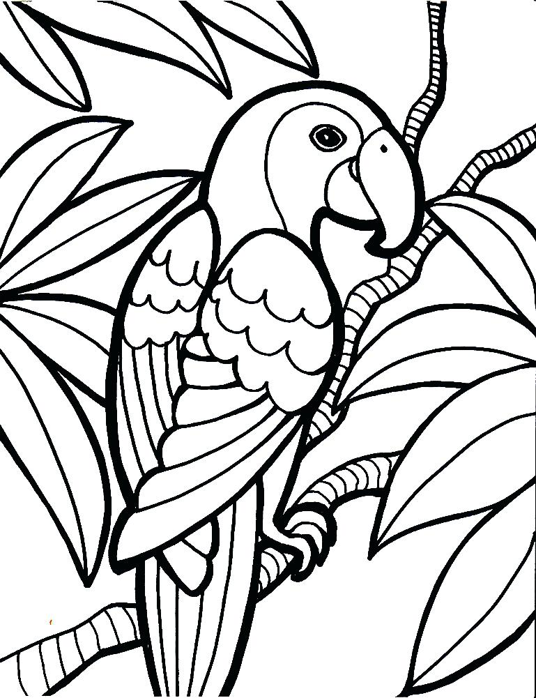 769x1001 Parrot Picture To Color Water Color Parrot Drawing Media