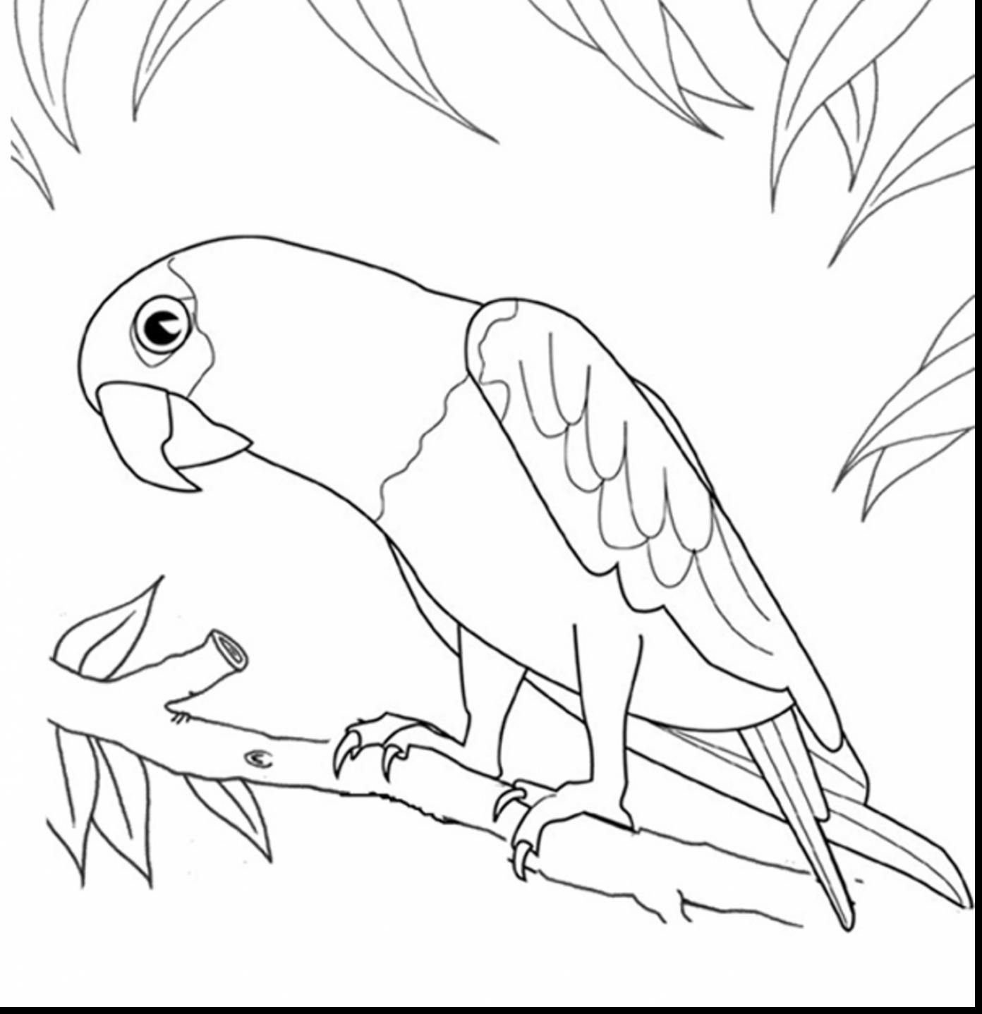 Parrot Bird Drawing At GetDrawingscom Free For Personal Use 47 Coloring Pages Page