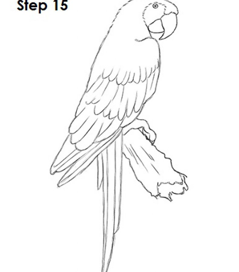791x900 Coloring Pages For Kids Birds Scarlet Macaw Flying Page Free