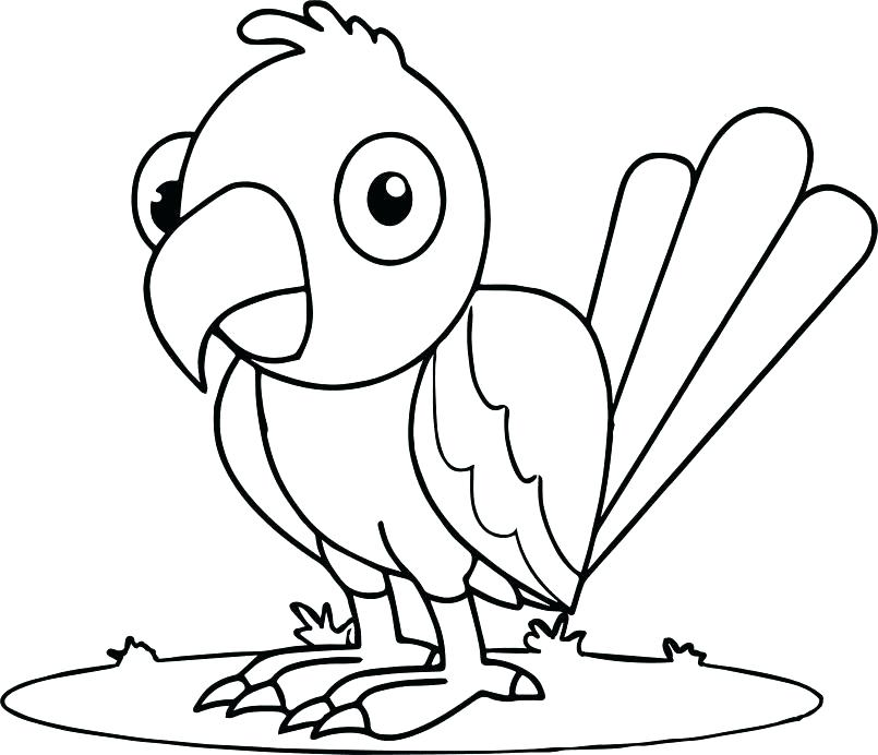 805x692 Parrot Coloring Parrot Coloring Page Cartoon Parrot Coloring Pages