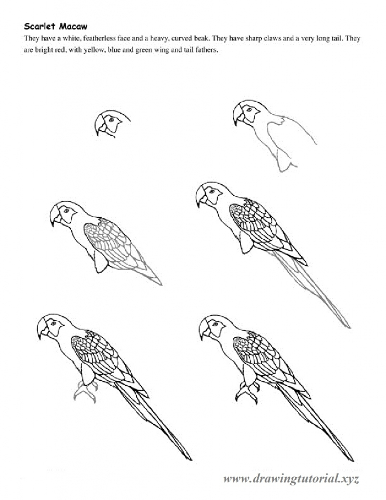 791x1024 How To Draw A Parrot How To Draw Parrot In Easy Steps Drawing