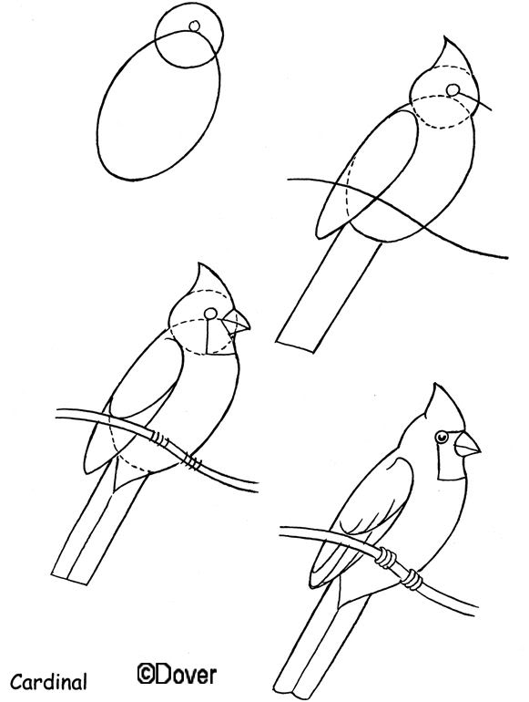 581x770 Dover Draw A Horse, Birds, Goat, Peacock, And Comics How To Draw
