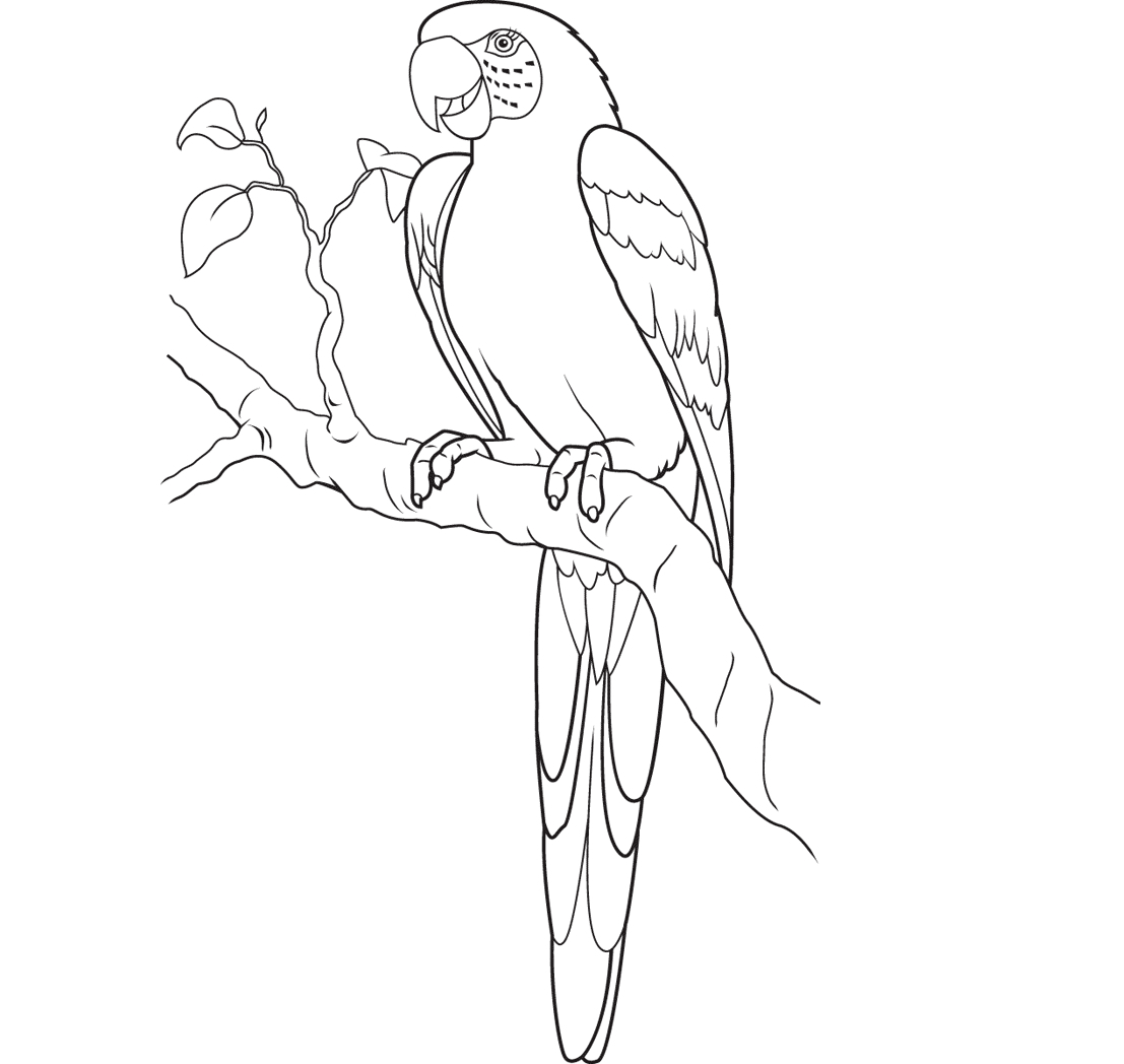 1107x1048 Drawing Picture Of Parrot Parrot