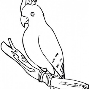 300x300 Cockatoo Parrot Coloring Page Cockatoo Parrot Coloring Page
