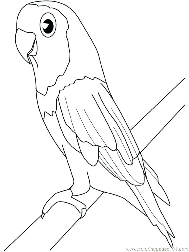 650x866 Here Are Parrot Coloring Pages Images Coloring Pages Parrot Great