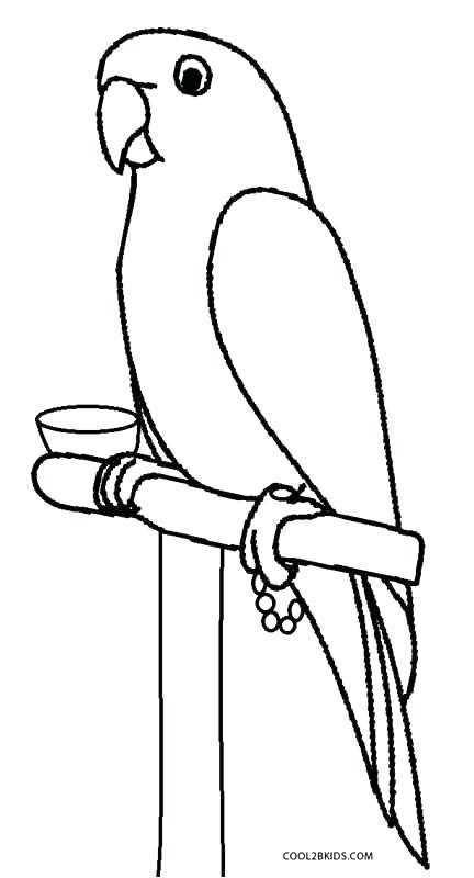 432x800 Parrot Coloring Page Printable Parrot Coloring Pages For Kids