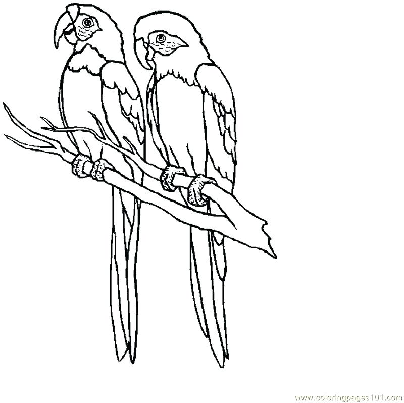 800x798 Parrot Picture To Color Parrot Coloring Page Media