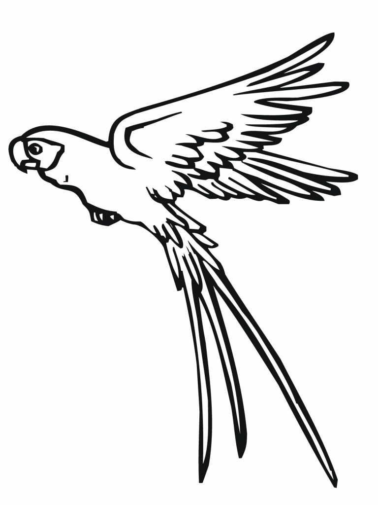 768x1024 Simple Parrot Drawing Flying Parrot Drawing Clipart Panda Free