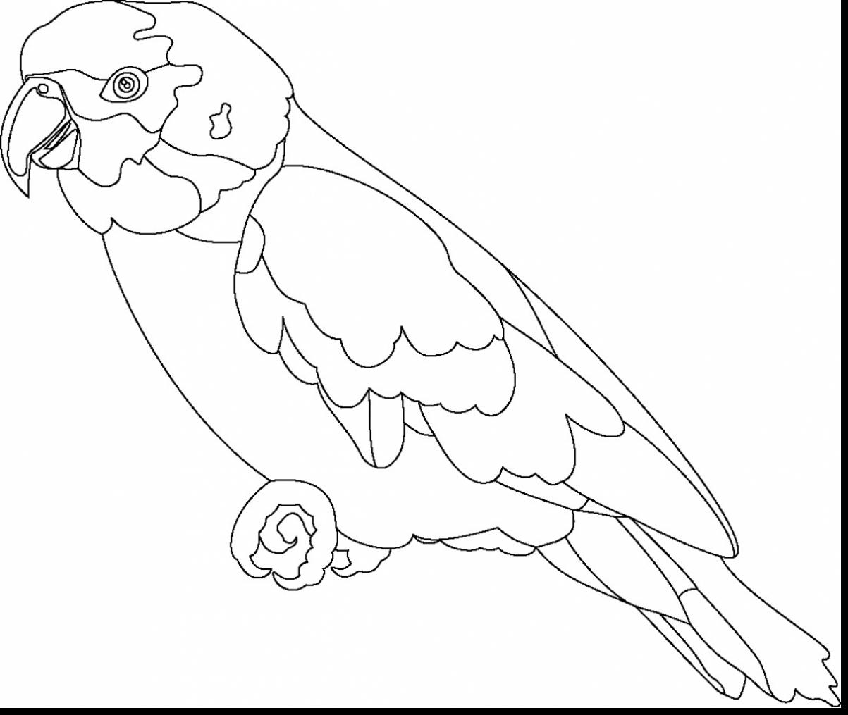 1203x1015 Fabulous Parrot Outline Coloring Page With Parrot Coloring Page