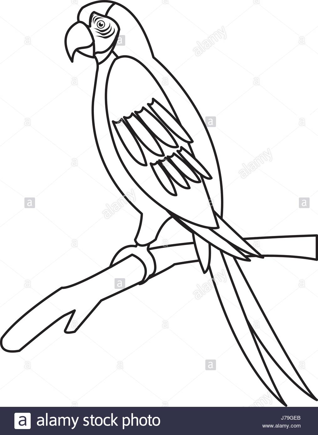 1016x1390 Astounding Parrot Outline Drawing Sketching Vector Printable