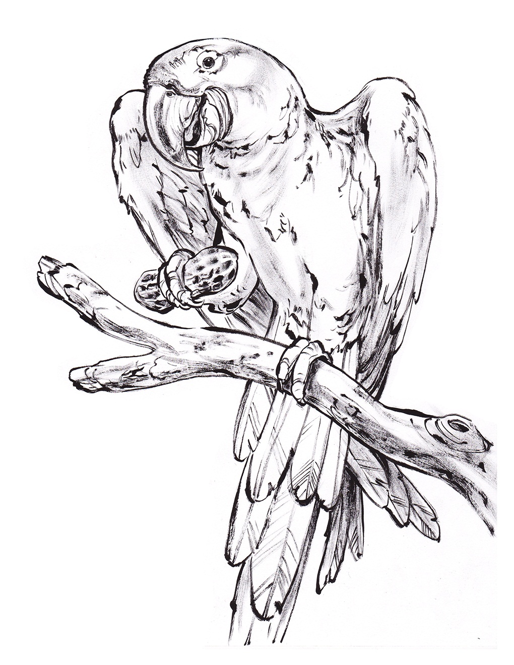 1020x1320 Happy Coloring Pages Of Parrots Best Ideas For You