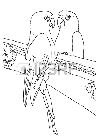 318x450 Original Black And White Outline Drawing Of A Parrot Looking