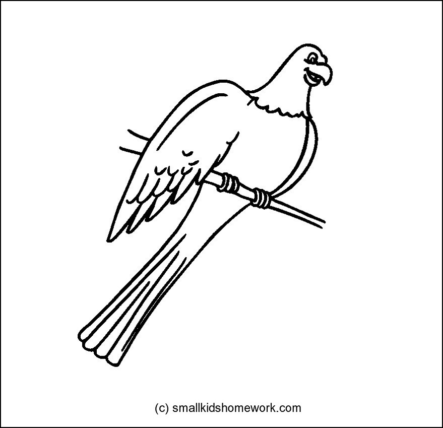 879x849 Parrot Bird Outline And Coloring Picture With Interesting Facts