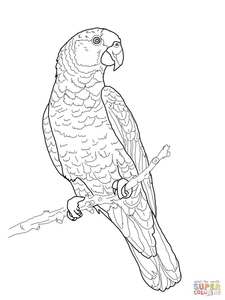 736x981 29 Best Sevimli Hayvanlar Images On Colouring Pages
