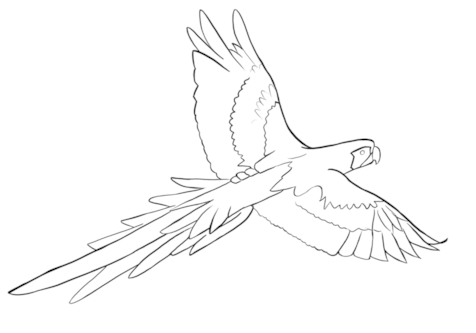 Parrot Drawing Outline at GetDrawings com | Free for