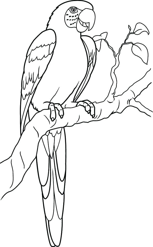 600x967 Parrot Picture To Color Coloring Page Outline Of Cartoon Bird