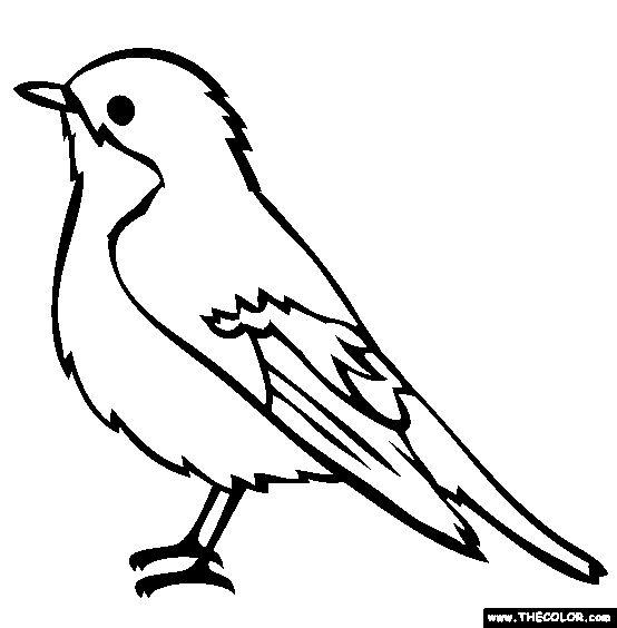 554x564 Parrot Clipart Outline Collection