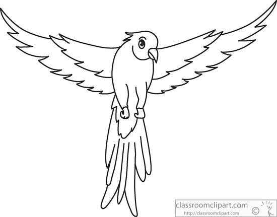 550x431 Animals Clipart Green Parrot Open Wings Black White Outline 914