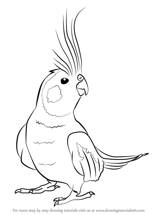 600x846 Pin By Debbie Diehl On Cute Bird, Draw And Drawing Ideas
