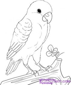 236x279 Pleasing Pictures Of Parrots To Draw Learn How A Kaka Step By