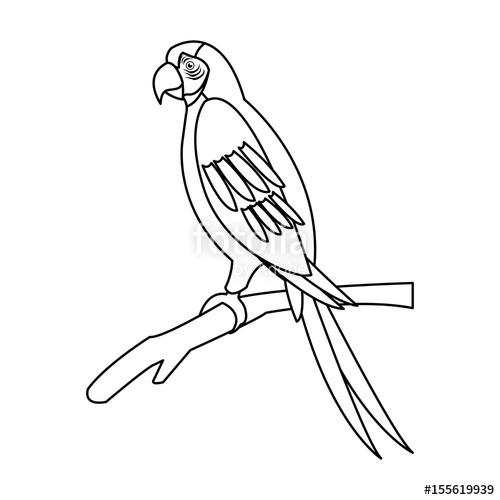 500x500 Macaw Parrot Branch Brazil Bird Wildlife Outline Vector
