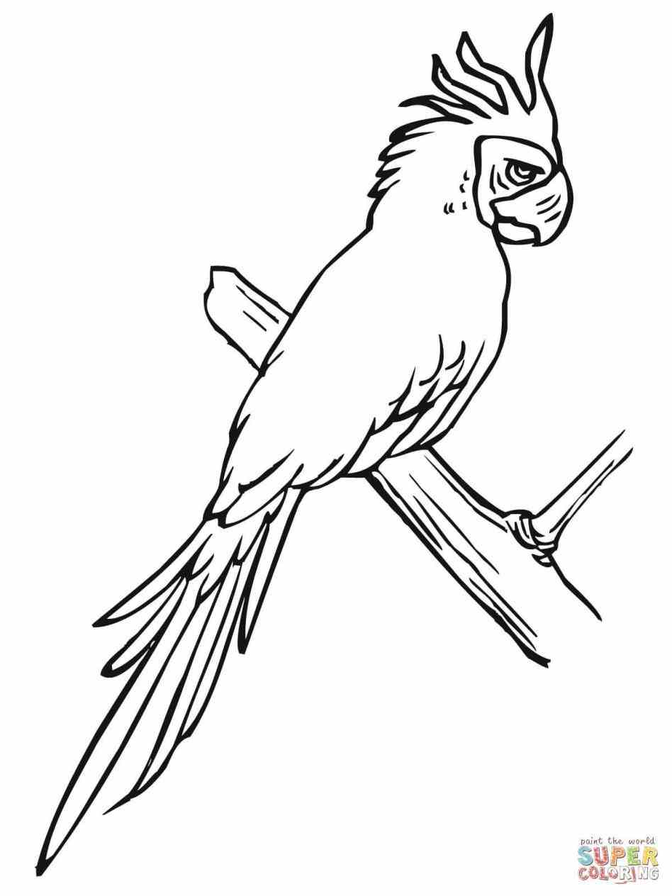 948x1264 Parrot Drawing Outline