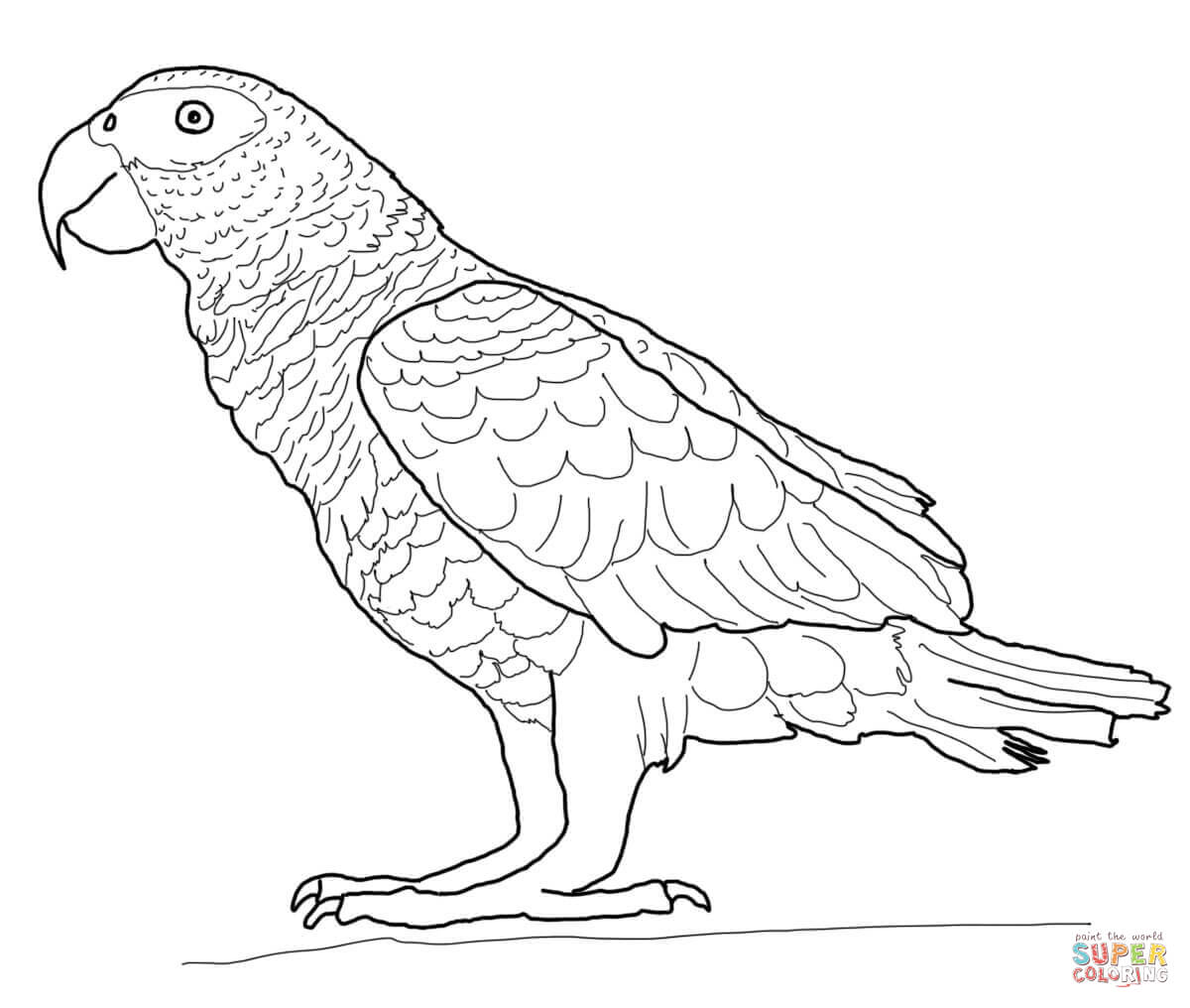 1200x1016 Free Parrot Coloring Pages 0 On Coloring Pages With Parrot