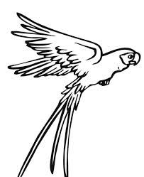 Parrot Drawing Pictures