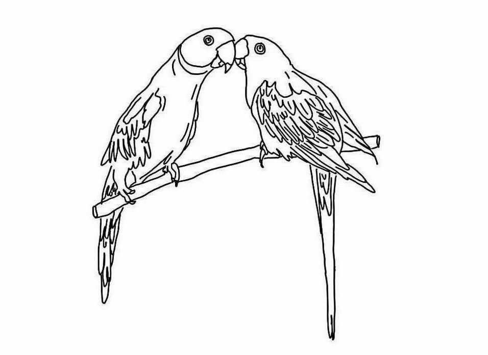 956x697 Colour Drawing Free Wallpaper Parrots Coloring Drawing Free Wallpaper