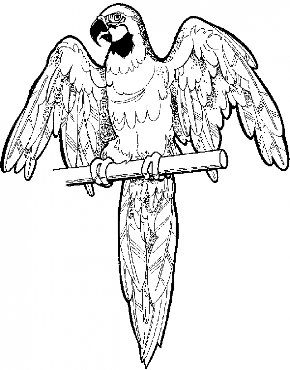 590x751 Free Online Pictures Of Birds To Color For Adults And Kids