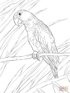 236x314 Learn How To Draw An African Grey Parrot (Birds) Step By Step