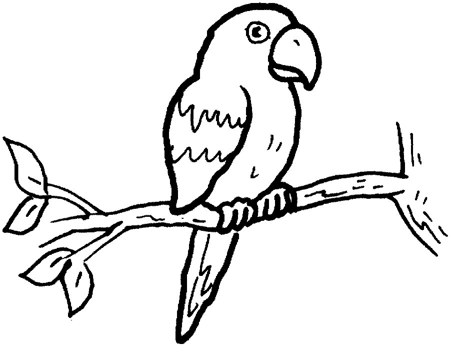 900x691 Parrot Clipart Black And White Letters Example