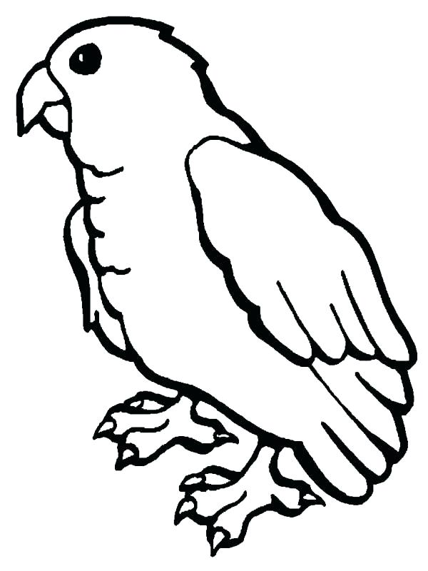 600x800 Parrot Images For Coloring Parrot Picture To Color Colour Drawing
