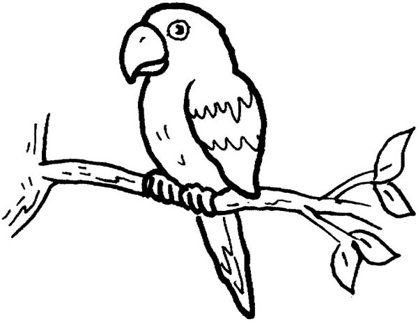 600x461 Parrot Picture To Color