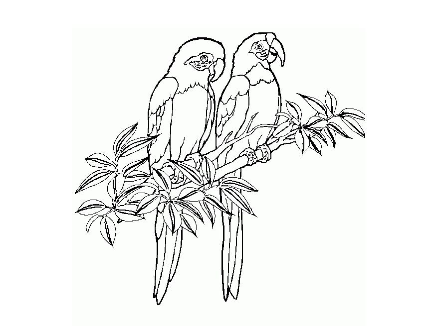 870x655 Parrot Picture To Colour 385387