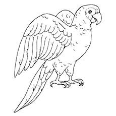 230x230 25 Cute Parrot Coloring Pages Your Toddler Will Love To Color