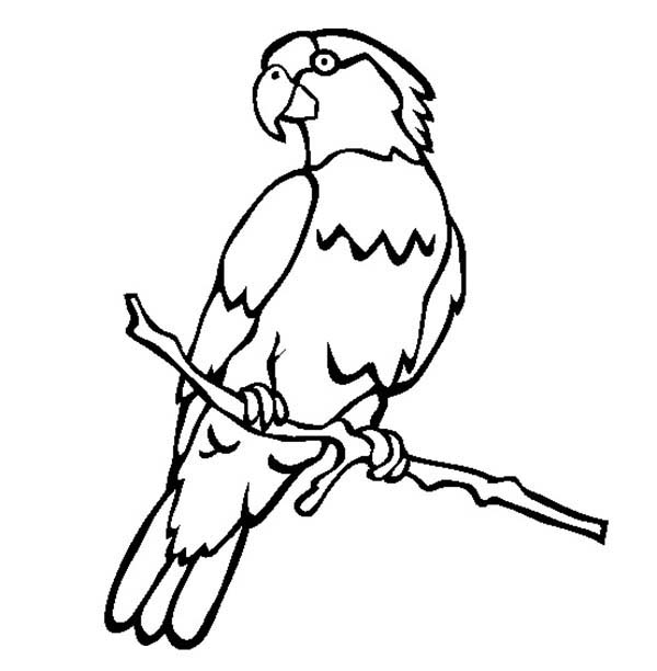 600x612 Parrot Clipart Colouring Page