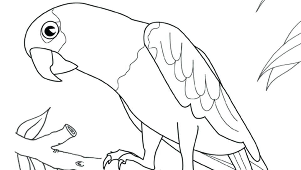 960x544 Picture Of Parrot For Coloring Flamingo To Color In Coloring Page