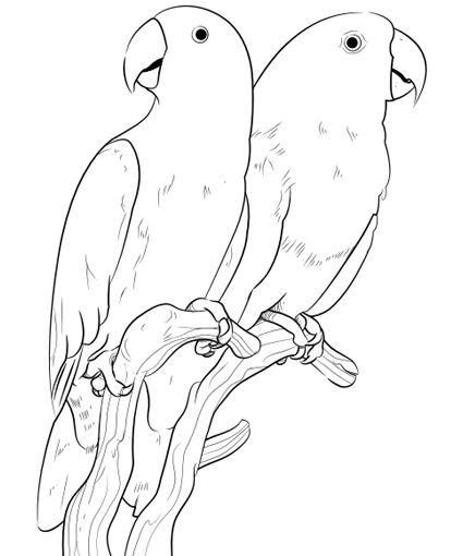 425x510 Bird To Color Pet Bird, Parrot, Finch Amp Canary Coloring Pages