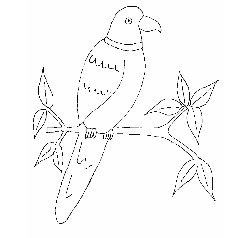1063x1004 Colours Drawing Wallpaper Beautiful Bird Parrot Coloring Colour