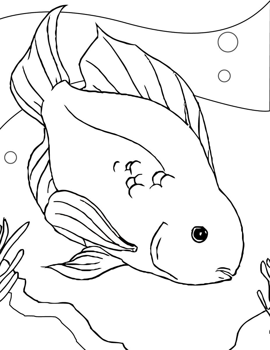 927x1200 Fish Color Page Parrot Fish Coloring Fish