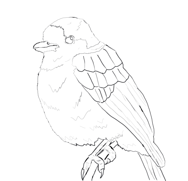 how to draw a parrot easy