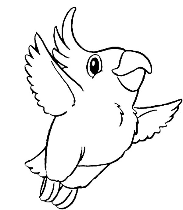 Parrot Easy Drawing At GetDrawings